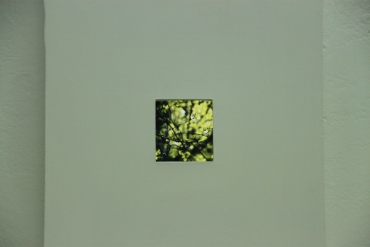Element in Green - Elin Webb