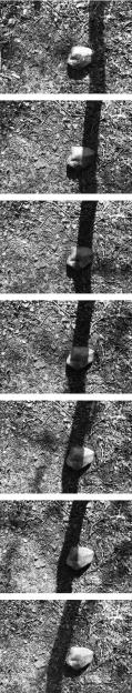 Black Wood Final.jpg