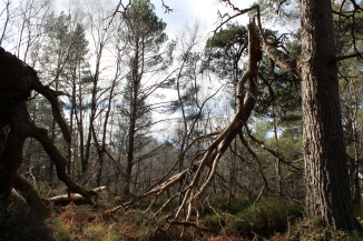Photographed at the Blackwood of Rannoch