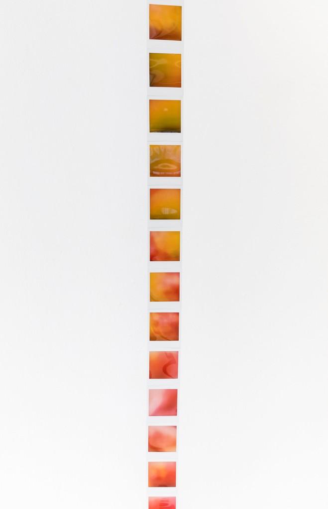 Detail of Mango | Stegomastodon instant image installation, sound 2019